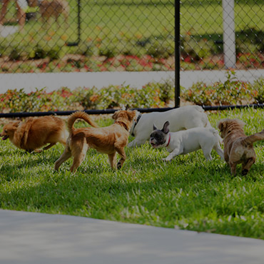 Large Dog Park at Lakeside Apartments